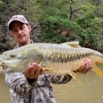 Golden Mahseer, Ramganga Rive, India, May 2008
