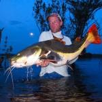 Redtail Catfish, Xeruni River Amazonas Brazil
