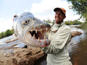 jeff currier tigerfish