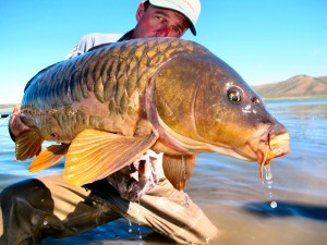 jeff currier fly fish carp