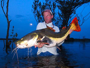 jeff currier redtail catfish brazil