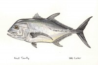 Giant White Trevally