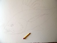 Roosterfish - Step 1