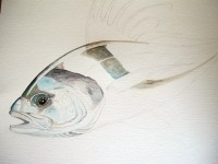 Roosterfish - Step 3