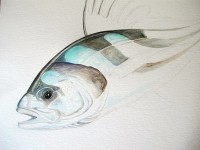 Roosterfish - Step 4