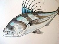 Roosterfish - Step 6