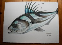 Completed Roosterfish Watercolot