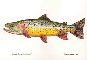 Snake River Fine Spotted Cutthroat