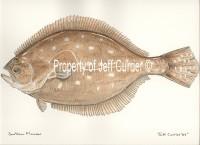 Texas Flounder