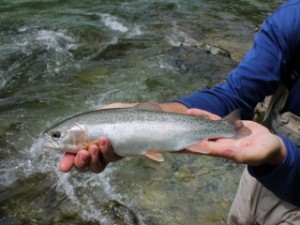 blog-June-1-2013-4-Idrijca-River-rainbow-trout