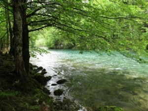 blog-June-2-2013-1-Fly-Fishing-in-Croatia-Kupa-River