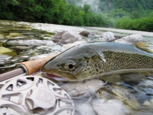 blog-June-6-2013-7-marble-trout-in-Italy