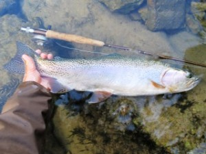 blog-June-7-2013-2-rainbow-trout-in-Slovenia
