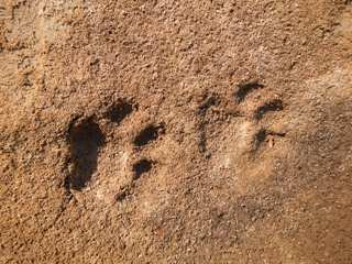 blo-July-29-2013-6-Jaguar-tracks