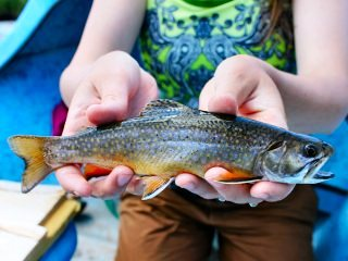 blog-July-10-2013-4-Brook-Trout