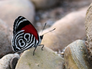 blog-July-30-2013-5-Butterfly-in-Bolivia