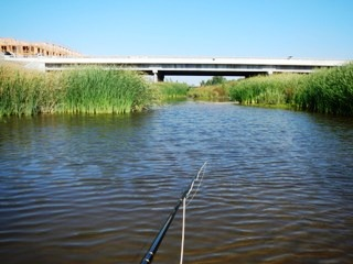 blog-Oct-12-2013-4-fly-fishing-for-carp-in-California