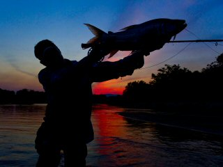 blog-Oct-30-2013-1-flyfishing-for-tigerfish