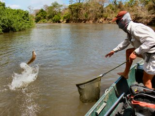 blog-Nov-4-2013-7-flyfishing-for-tigerfish