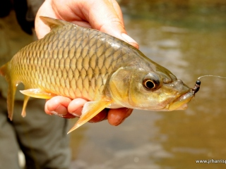 blog-Nov-5-2013-8-rhino-fish-Jim-Harris-photo
