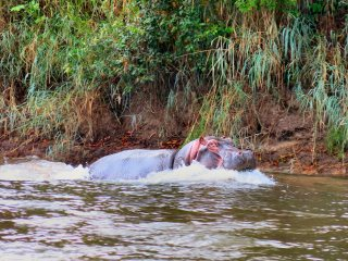 blog-Nov-6-2013-4-hippopotamus