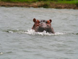 blog-Nov-8-2013-3-hippopotamus