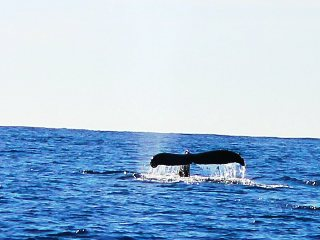 blog-Dec-13-2013-3-humback-whale