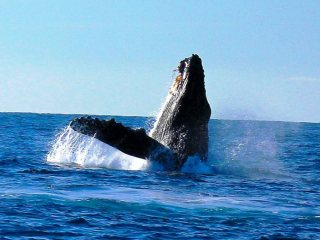 blog-Dec-15-2013-humpback-whale