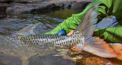 blog-Nov-16-2013-12-tigerfish-release