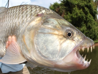 blog-Nov-16-2013-9-tanzaniae-tigerfish