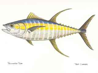 blog-March-20-2014-1-jeff-curier-yellowfin-tuna-art