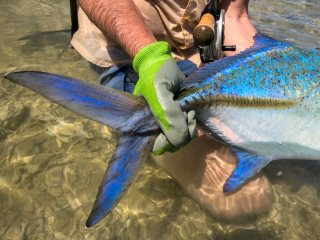 blog-March-26-2014-8-flyfishing-for-bluefin-trevally