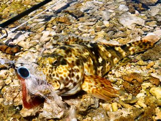blog-March-28-2014-3-flyfishing-the-red-sesa