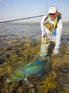 blog-March-31-2014-17-flyfishing-for-bluefin-trevally