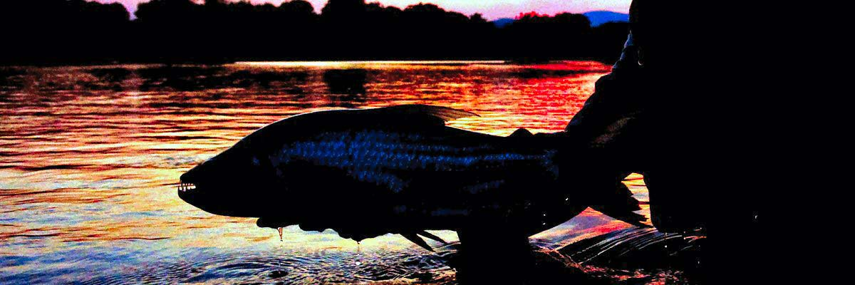 jeff-currier-tigerfish-sunset-slider2