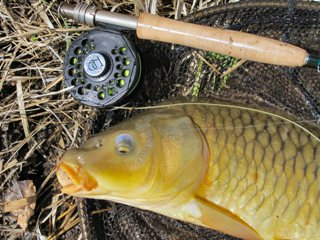 blog-May-3-2014-7-mirror-carp-on-the-winston