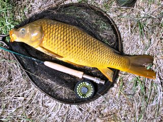 blog-May-3-2014-8-common-carp-flyfishing