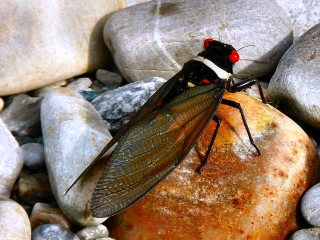 blog-June-1-2014-15-cicada-in-bhutan