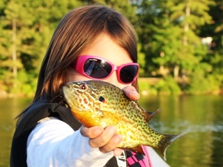 blog-June-24-2014-2-pumpkinseed-sunfish