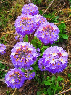 blog-May-19-2014-3-flowers-of-bhutan