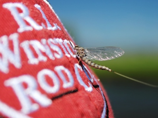 blog-July-8-2014-4-winston-fly-rods