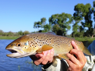 blog-July-8-2014-6-flyfishing-wyoming