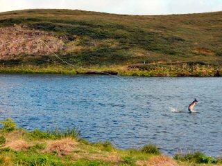 blog-Aug-11-2014-7-atlantic-salmon-fsihing-in-iceland