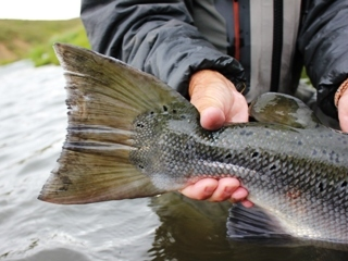 blog-Aug-5-2014-1-jeff-currier-flyfishing-in-iceland