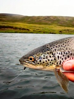 blog-Aug-6-2014-3-flyfishing-for-brown-trout-in-iceland