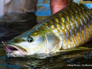 blog-Aug-27-2014-10-Golden-Mahseer