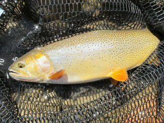 blog-Aug-29-2014-3-snake-river-cutthroat