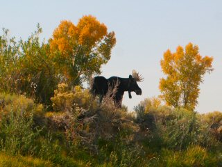 blog-Sept-16-2014-1-moose