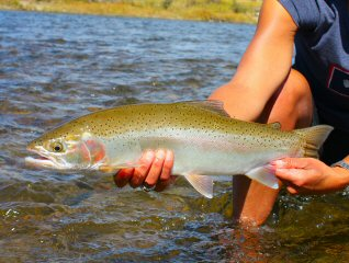 blog-Sept-17-2014-10-rainbow-trout
