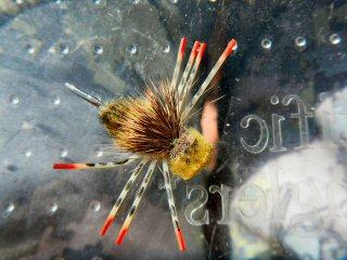 blog-Sept-19-2014-8-turneffe-crab-fly